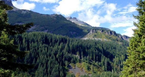a vast forest draped over a mountain beneath a blue sky