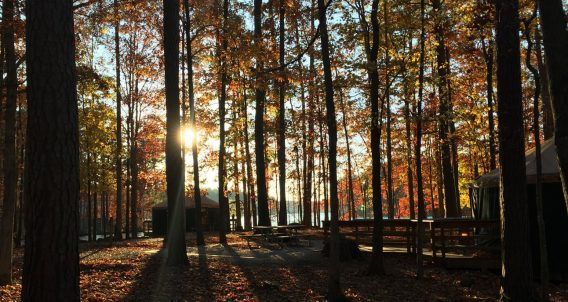 tall pines and sunrises in Georgia