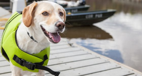 a dog wearing a life jacket on a boat dock