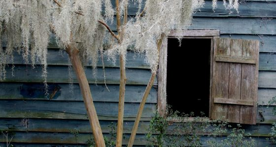 an open window leads to unknown darkness cutting through an old blue barn, a tree hung with whitened spanish moss in front of it all