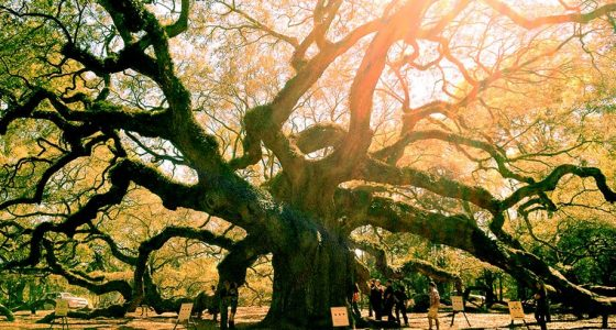 a massive live oak tree bathed in glory and sunshine, limbs outstretched like a mother holding her child, the earth below
