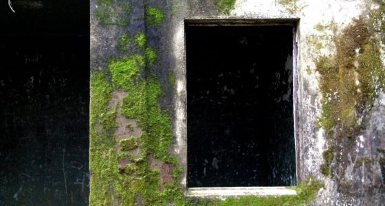 moss and lichen grow on an old military battery
