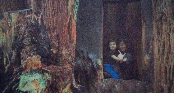Two boys stand inside of a redwood which has had it