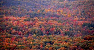 a flurry of autumn colored trees in the Pennsylvania mountains