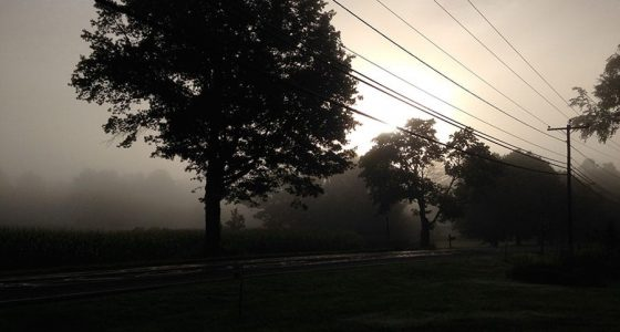 foggy sunset behind telephone wires and trees