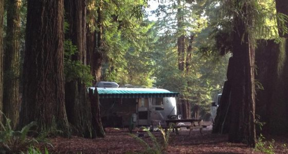 an Airstream travel trailer parked among the redwoods in California